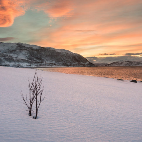 Snow, rock, sunrise, pink, snow, sea, sky, morning, mountain, norway